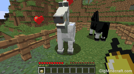 Keep the horses by making fence around them - Breed Horses in Minecraft
